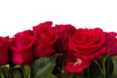 El ramo de rosas rosadas oscuras se cierra para arriba Fotografía de archivo