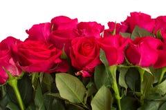 El ramo de rosas rosadas oscuras se cierra para arriba Fotos de archivo