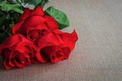 El ramo de rosas vivas del rojo o del escarlata con verde se va en los vagos Fotografía de archivo