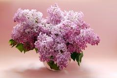 El ramo de una lila apacible de la primavera florece en un fondo rosado Imagen de archivo