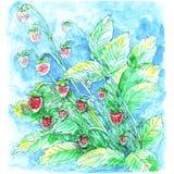 El ramo de verde rojo de las bayas de la fresa salvaje sale ejemplo del dibujo de la acuarela del claro azul del fondo stock de ilustración