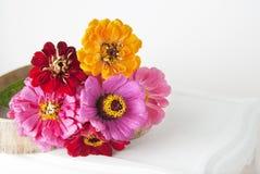 El ramo de zinnia rosado florece en un florero aislado indoor Copie el espacio fotografía de archivo libre de regalías
