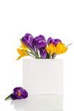 El ramo del azafrán florece en florero con la tarjeta vacía Imágenes de archivo libres de regalías