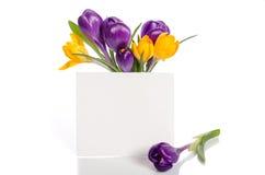 El ramo del azafrán florece en florero con la tarjeta vacía Fotografía de archivo