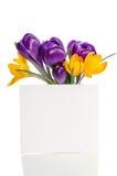 El ramo del azafrán florece en florero con la tarjeta vacía Foto de archivo libre de regalías