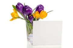 El ramo del azafrán florece en florero con la tarjeta vacía Fotos de archivo