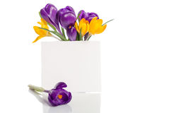 El ramo del azafrán florece en florero con la tarjeta vacía Fotos de archivo libres de regalías