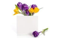 El ramo del azafrán florece en florero con la tarjeta vacía para el texto Imagenes de archivo