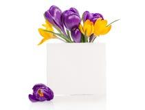 El ramo del azafrán florece en florero con la tarjeta vacía para su texto Imagen de archivo libre de regalías