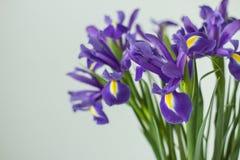 El ramo delicado de iris florece en un fondo ligero Fotos de archivo libres de regalías