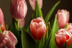 El ramo florece tulipanes Imágenes de archivo libres de regalías