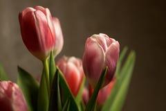 El ramo florece tulipanes Foto de archivo libre de regalías