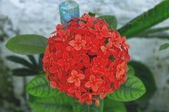 El ramo más hermoso de flores en el jardín Foto de archivo libre de regalías