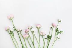 El ranúnculo hermoso de la primavera florece en la tabla blanca desde arriba Frontera floral rosada Maqueta de la boda Color en c foto de archivo