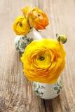 El ranúnculo persa amarillo florece (ranúnculo) en backgrou de madera Foto de archivo