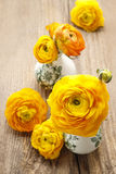 El ranúnculo persa amarillo florece (ranúnculo) en backgrou de madera Imagen de archivo