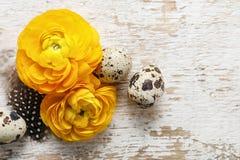 El ranúnculo persa amarillo florece (ranúnculo) en backgrou de madera Fotografía de archivo libre de regalías