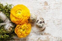 El ranúnculo persa amarillo florece (ranúnculo) en backgrou de madera Fotografía de archivo