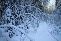 El rastro de la moto de nieve Fotos de archivo