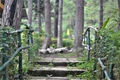 El rastro de naturaleza en el bosque imagen de archivo
