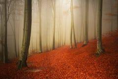El rastro hermoso con rojo se va en bosque de niebla Imagen de archivo libre de regalías