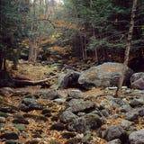El rastro pedregoso del arroyo, Carter Range, bosque del Estado blanco de la montaña, New Hampshire foto de archivo
