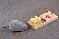 El ratón delante de un pedazo de queso atrapado foto de archivo