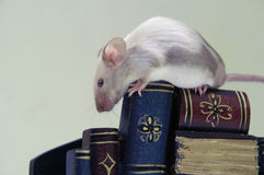 El ratón en la pila de libros. Imagenes de archivo