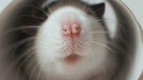 El ratón mira en un agujero redondo almacen de video
