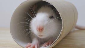 El ratón mira en un agujero redondo almacen de metraje de vídeo