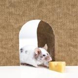 El ratón que sale de él es agujero Fotos de archivo