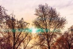 El rayo de sol tibio del invierno pasa a través de las ramas de un árbol fotografía de archivo libre de regalías
