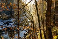 El rayo solar pensó el bosque en invierno cerca de Saut du Doubs, Franchecomté Fotos de archivo libres de regalías