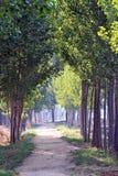 El árbol alineó el camino Imagen de archivo