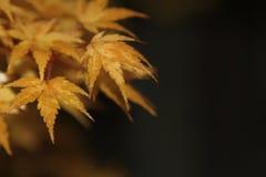 El árbol anaranjado y amarillo se va con un fondo del bokeh Fotos de archivo