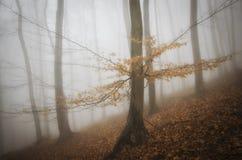 El árbol con la naranja se va en bosque misterioso en otoño Fotografía de archivo libre de regalías