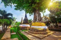 El árbol cubre pagodas antiguas en Wat Na Phra Men Fotografía de archivo libre de regalías
