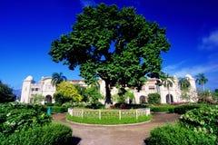 El árbol de Ipoh Fotografía de archivo