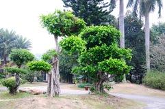 El árbol doblado Imagen de archivo