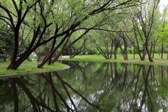 El ?rbol poderoso con las hojas verdes invirti? la reflexi?n en agua fotografía de archivo