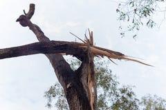 El ?rbol roto cae abajo despu?s de tormenta pesada fotografía de archivo libre de regalías