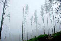 El recorrer brumoso del bosque imagen de archivo libre de regalías