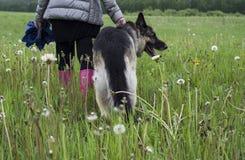 El recorrer con un perro Foto de archivo libre de regalías