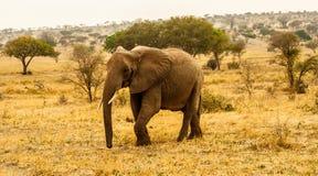 El recorrer del elefante Imagen de archivo