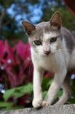 El recorrer del gato Imagenes de archivo