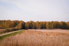 El recorrer en bosque del otoño Foto de archivo libre de regalías