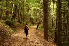 El recorrer en el bosque Imagen de archivo libre de regalías