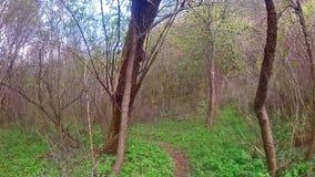 El recorrer en un bosque almacen de video
