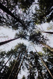 El recorrer solamente en el bosque Foto de archivo libre de regalías