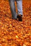 El recorrer a través de parque Imagen de archivo libre de regalías